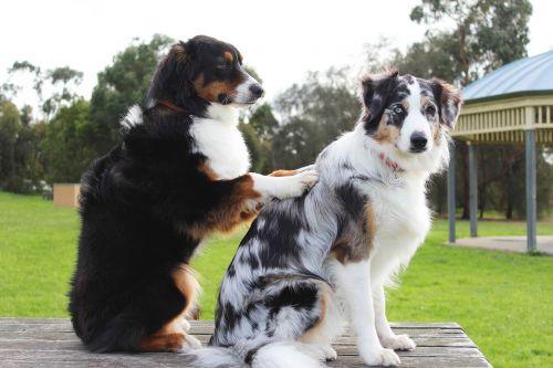 massage dogs friends