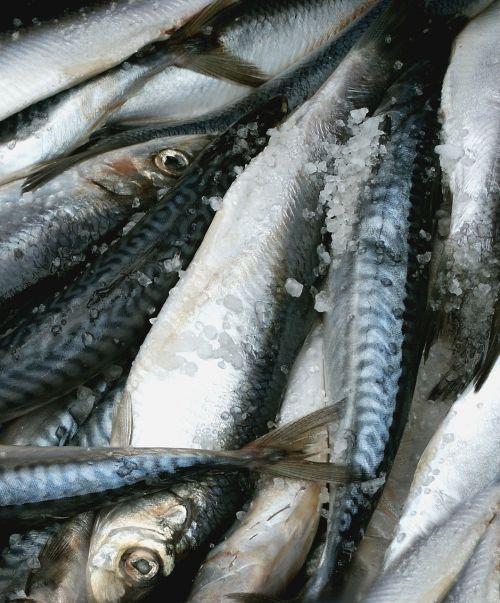 mat fish herring