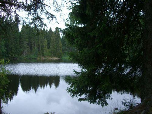 mathisleweiher bog lake mirroring