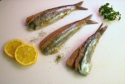 maties herring fish