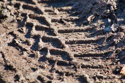 mature imprint  mud  tire track