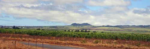 maui landscape sugarcane
