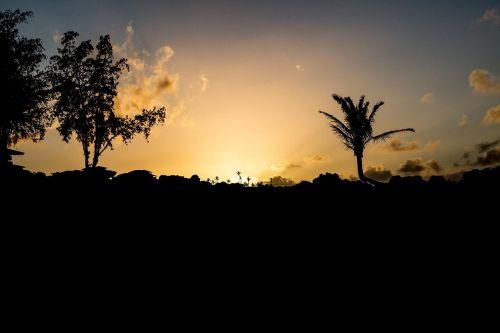 maui sunset sunset palm