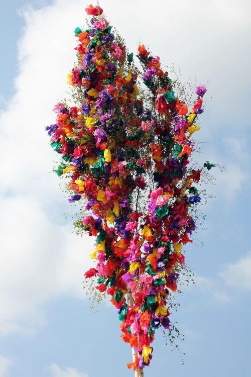 galiolė,tradicija,Gegužė,pavasaris,muitinės,papuoštas,papuoštas medis,dangus,beržas,pagal užsakymą,juostos,spalvinga,spalvingi juostelės,gali diena