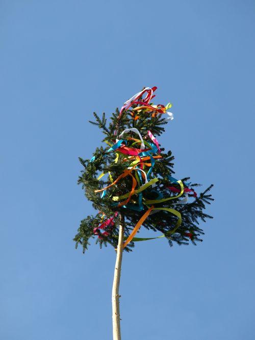 galiolė,1,Gegužė,tradicija,papuoštas,reikia senų,papuoštas medis