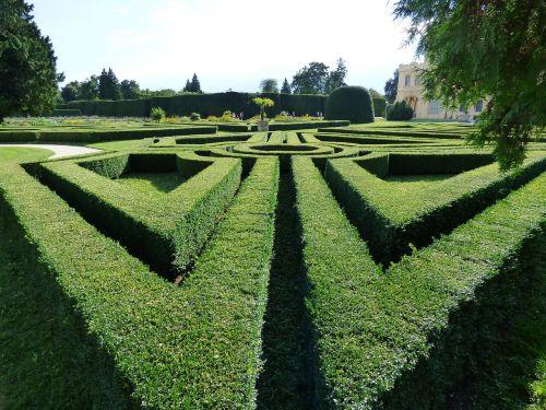 maze hedge green