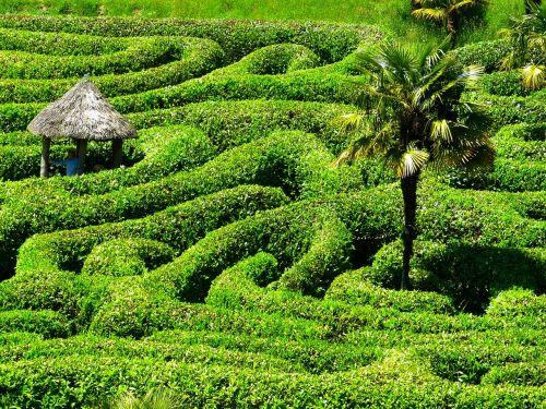 maze labyrinth glendurgan