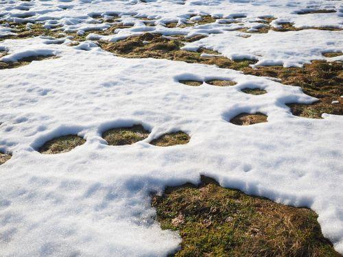 meadow snow snow melt