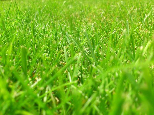 meadow rush grass