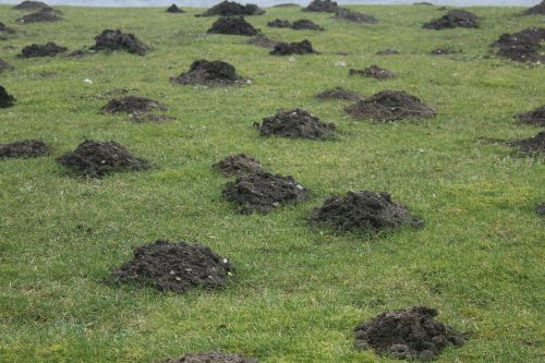 meadow molehills beneficial insects