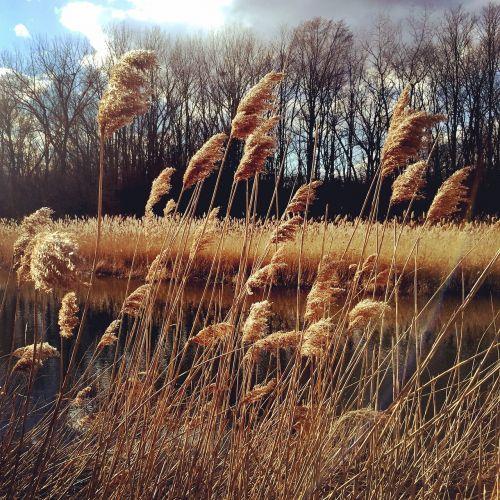 pieva,pavasaris,saulė,laukas,žolė,gamta,Natūralus grožis,sezonas,kraštovaizdis,lauke,pavasario peizažas,saulėtas