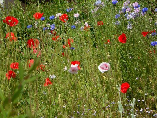 meadow butterfly meadow summer meadow