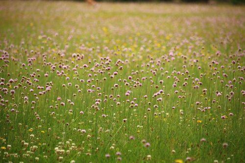 meadow flowers blossom
