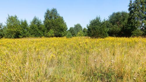meadow grass summer