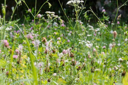 meadow flowers summer
