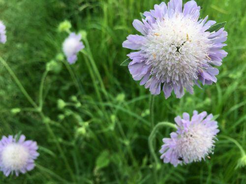 meadow grass closeup