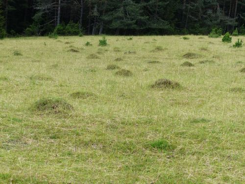 meadow glade ant hill
