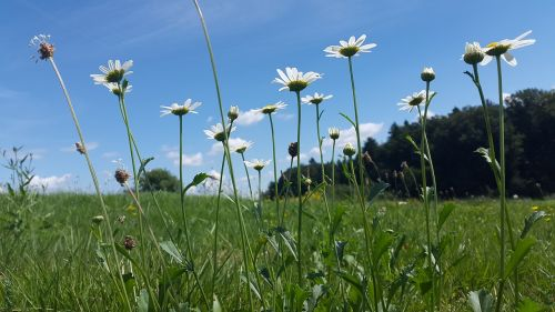 meadow summer meadow nature