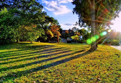 meadow trees shadow