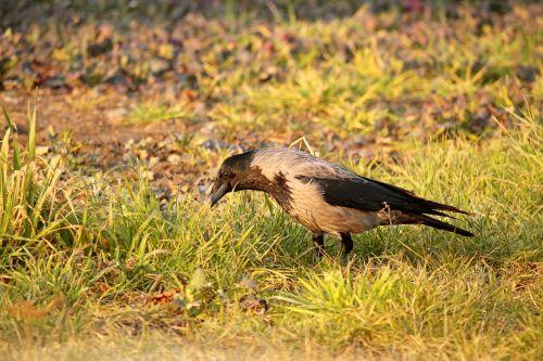 meadow grass bird
