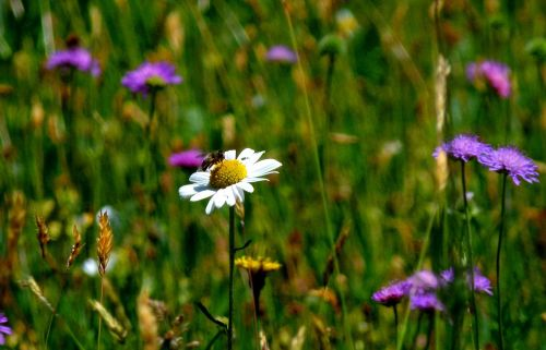 meadow mood nature