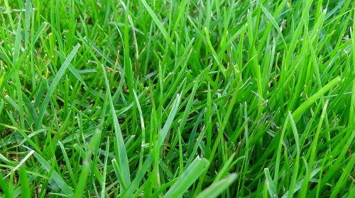 meadow grass green