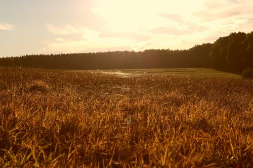 meadow sunset time