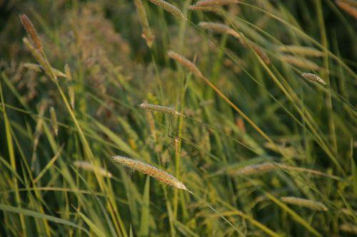 meadow morning schnake