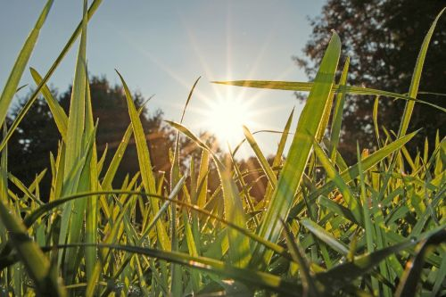 meadow grass nature