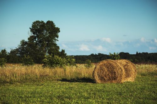 meadow haymaking collections
