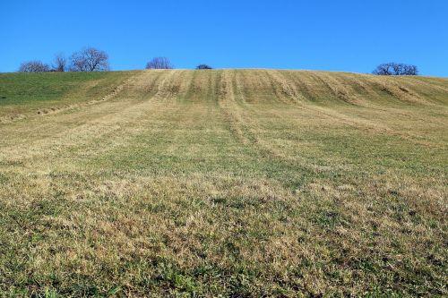 meadow hill horizon