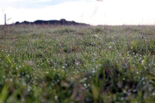 meadow green morgentau