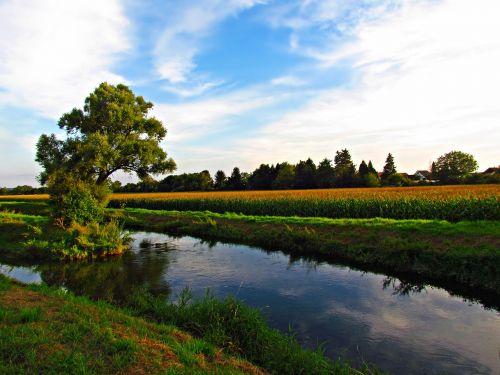 meadow water tree