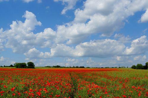meadow landscape field