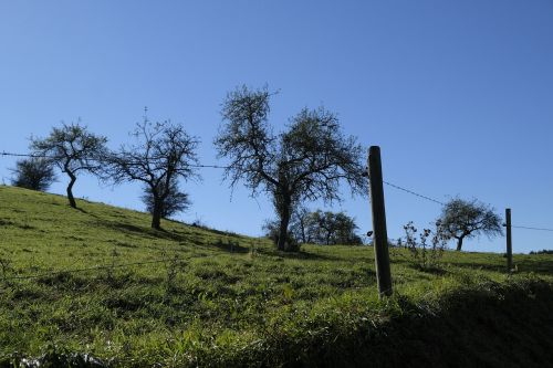 meadow fence barbed wire