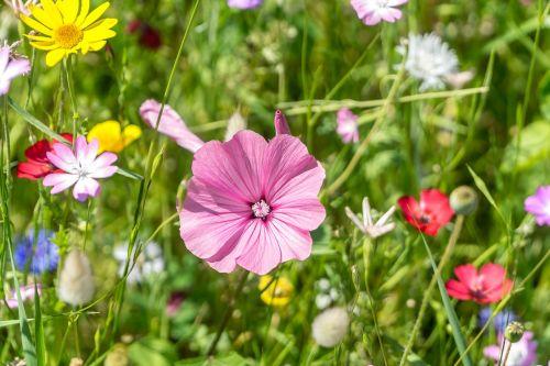 meadow flower blossom