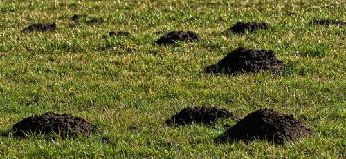 meadow grass erdhaufen