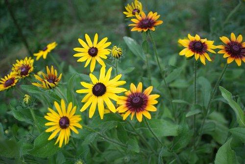 meadow  foliage  flower
