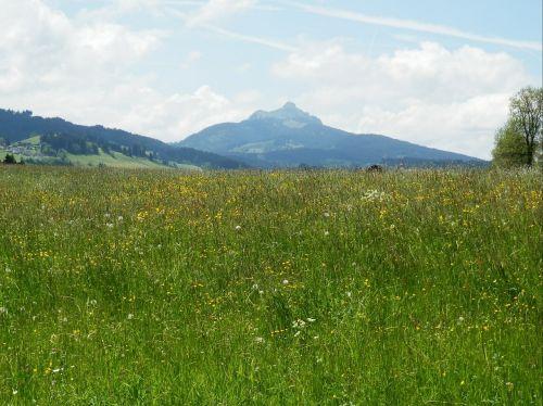 meadow allgäu greened