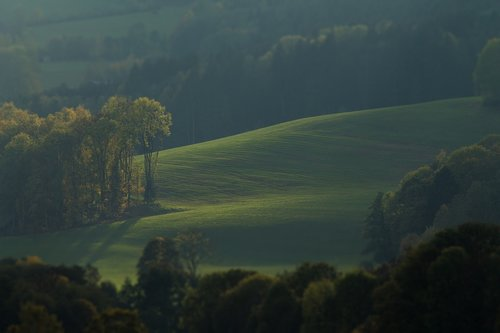 meadow  trees  landscape