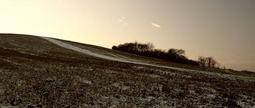 meadow  winter  trees