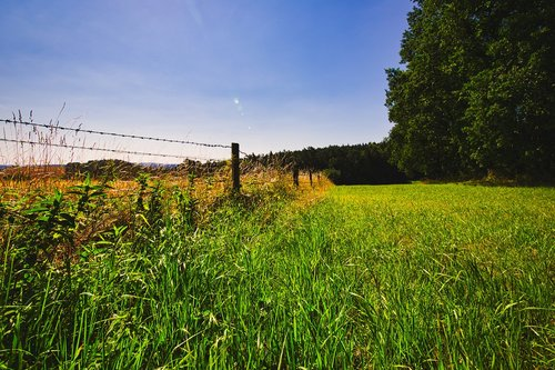 meadow  pasture fence  sky