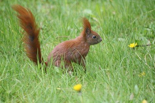 meadow  spring  animal