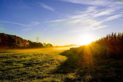 meadow sunrise morning mist