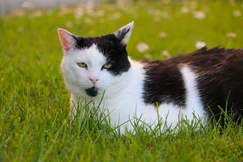 meadow cat concerns