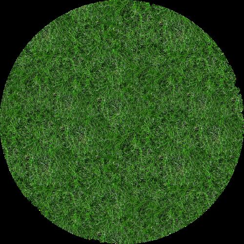 meadow grass blade of grass