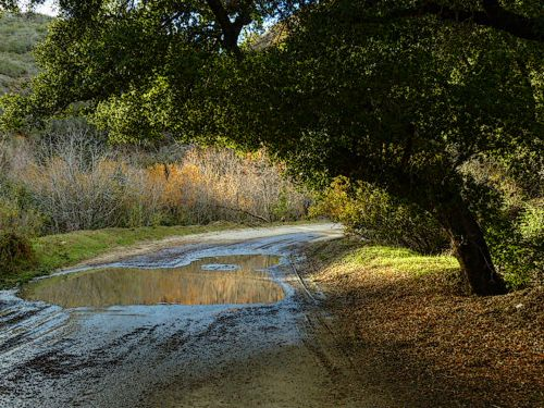 Meadow Road After Rainfall