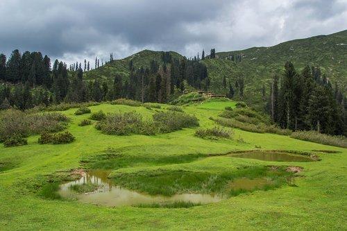 meadows  green  pakistan