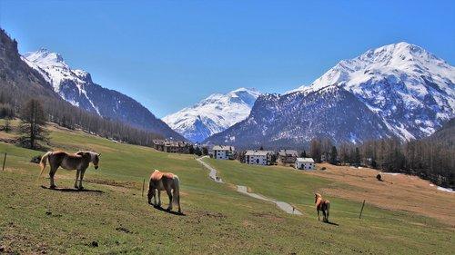 meadows  mountain  horses