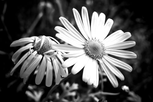 meadows margerite marguerite meadow margerite